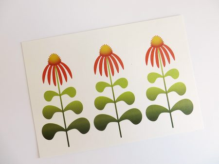 Wenskaart-Echinacea-liggend-schuin